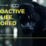 100 Thoughts On The 100: Radioactive Wildlife, Explored